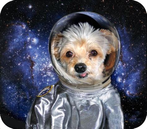 Dogs In Space sticky s web page space