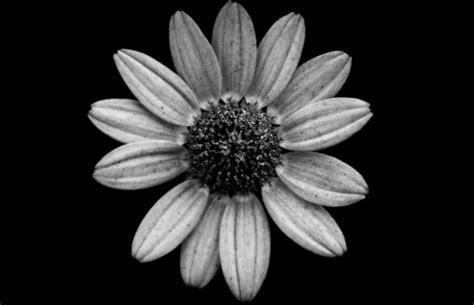 jason mcgroarty takes black  white flowers