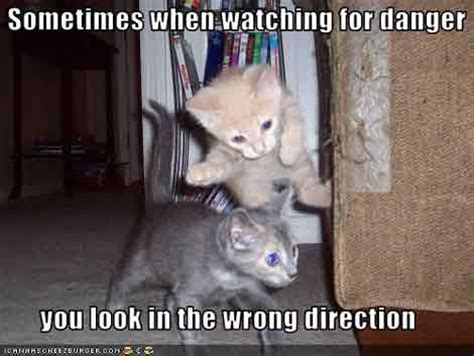 kitten pictures with captions pictures with captions pictures with