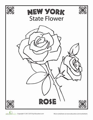 new york state flower worksheet education com
