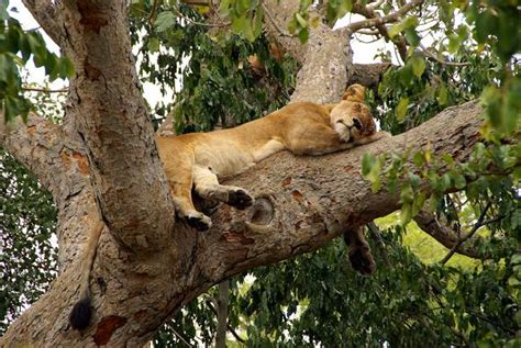 queen elizabeth national park uganda wildlife safari africa uganda explorer safari package lake mburo