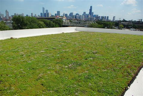 green roof green roof on car dealership in chicago il vegetal i d usa