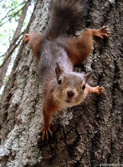 well the squirrels are back commercial script 93 best squirrels images on pinterest squirrels wild