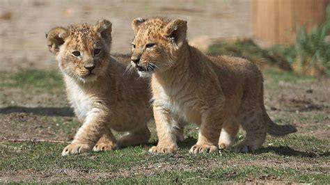 deutsche bank zoologischer garten odense zoo zoologischer garten visitodense