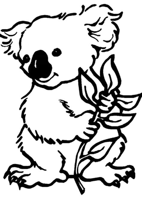 koala coloring pages koala outline cliparts co