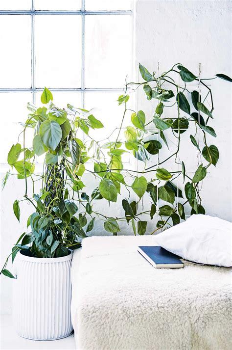 Klimplant Voor Binnen gave idee 235 n voor hippe kamerplanten i my interior