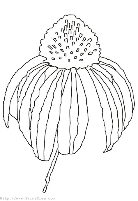 coloring pages of fall flowers fall flower