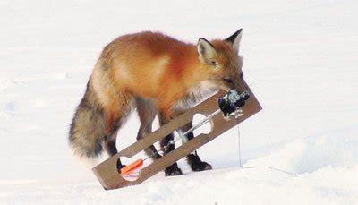 ice fishing fox lake superior magazine