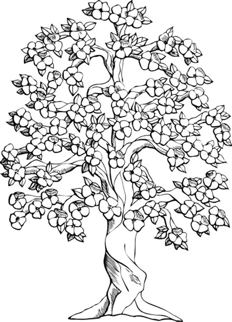 Coloring Now 187 Blog Archive 187 Rainforest Coloring Pages Rainforest Coloring Page