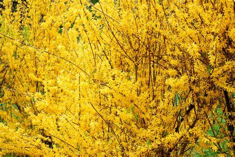 yellow walls yellow wall papinologii