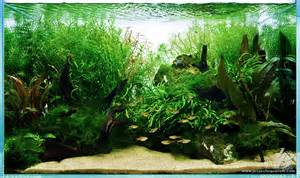 special projects on aquascaping planted