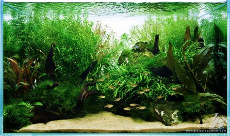 Planted Aquarium Aquascaping by Special Projects On Aquascaping Planted