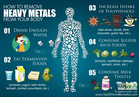 Human Detox Of Lead Copper Nickel Tin by Cilantro Can Remove 80 Of Heavy Metals From The