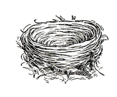 free coloring pages of baby birds nest