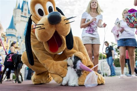 kingdom dogs disney invited 101 dogs inside the magic kingdom this weekend disney every day