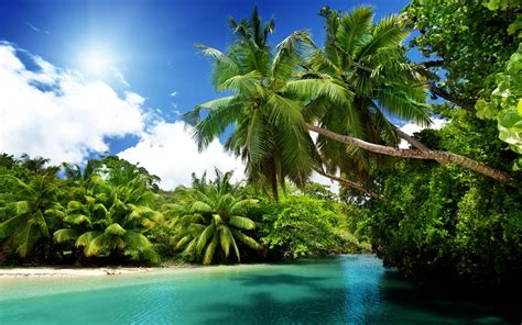 exotic island palm trees sand beach ocean turquoise water