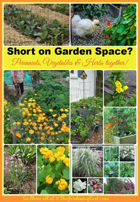 perennial garden vegetables the garden charmers combine perennials and vegetables
