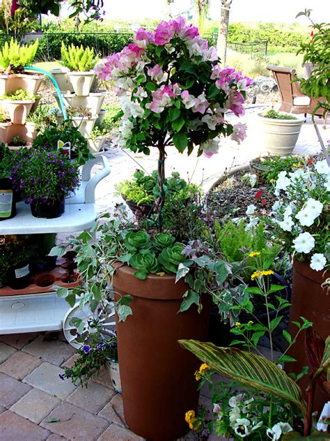 container gardening forum container gardening with katg cubit s container