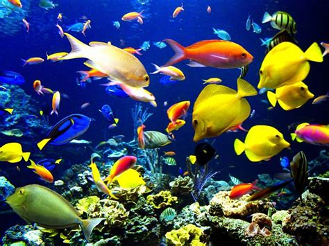 Lu Neon Hias beautiful underwater world in blue pics funtim