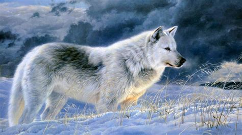 white wolf wallpapers wallpaper cave grey wolf wallpapers wallpaper cave