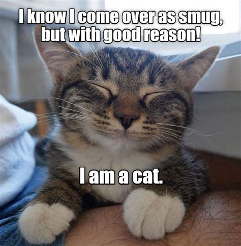 Katzen Meme - 18562 best katzen images on pinterest animals funny