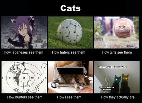 cats what think i do what i really do