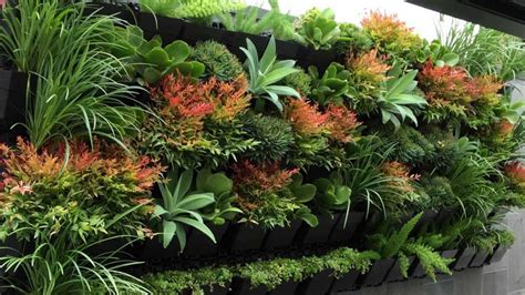 plants for wall gardens homelife 10 best plants for vertical gardens