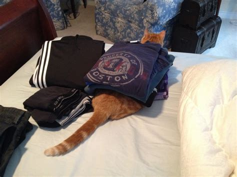 can i use human shoo on my cats who just want to sit on your clean clothes