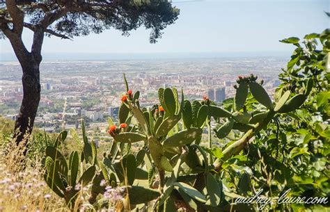 promenades dans la barcelone 2246719119 balade nature facile 224 barcelone voyage en espagne blog