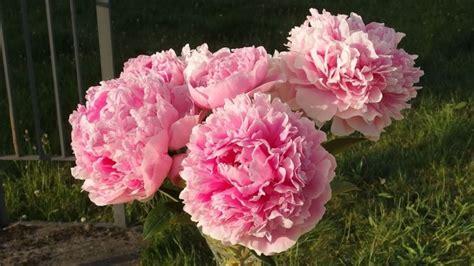 Wie Lange Halten Schnittblumen by Schnittblumen L 228 Nger Sch 246 N Frisch Halten Frag Mutti