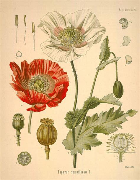 define botanical garden botanical definition what is