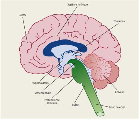 douleur le cerveau humain processus perception douleur