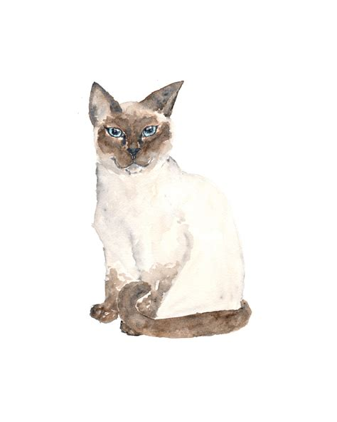 paint a cat watercolor cat painting cat siamese cat watercolor