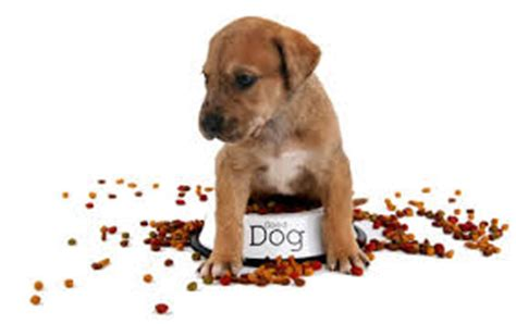 when can puppies eat solid food can dogs eat tangerines 4 things you need to all pet magazine