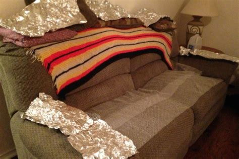 keep dog off couch with aluminum foil keep dog off sofa how to keep your pets off the furniture