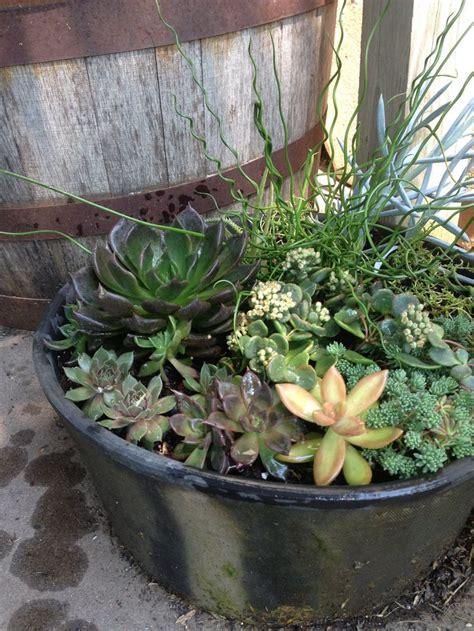 Succulent Dish Garden Ideas Succulent Dish Garden 3 Garden I Succulents Pinterest