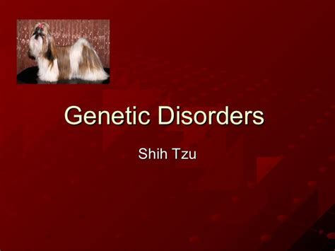 shih tzu diseases genetic disorders shih tzu