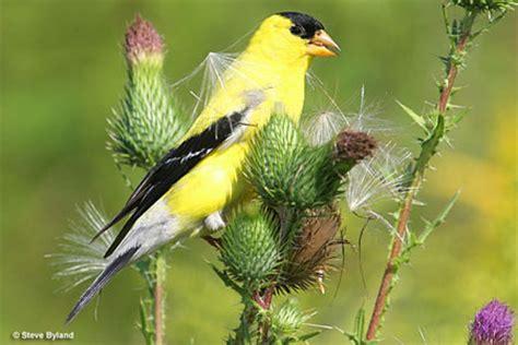washington state bird facts and feeding birds in washington