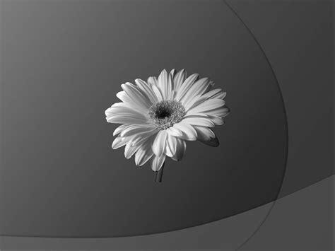 desktop wallpaper black and white flowers black and white flower wallpapers www imgkid com the