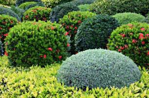 Bushes For Landscaping Shrub Care Cut Above The Rest