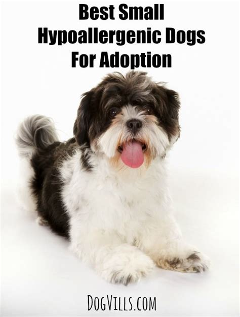 best small family dogs best 25 small hypoallergenic dogs ideas on small dogs small puppy