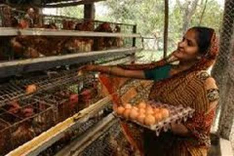 backyard poultry farming in india current picture of poultry farming in india 2012 the