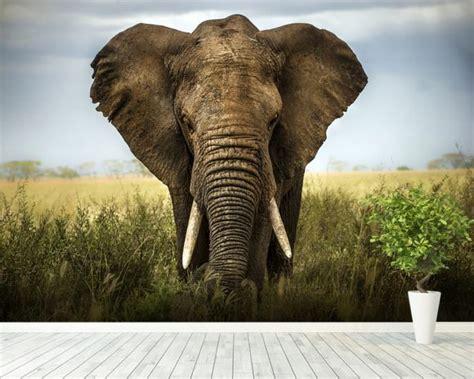 elephant wall mural elephant wall mural elephant wallpaper wallsauce usa