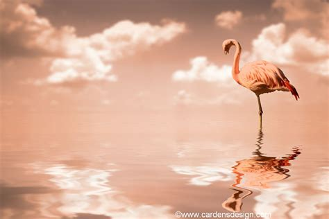 wallpaper flamingos flamingo wallpaper my wallpaper home