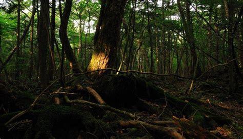 bosque aokigahara el bosque de los suicidios malditos aokigahara el aterrador quot bosque de los suicidios quot fotos