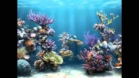 imagenes de jardines acuaticos ecosistemas acuaticos 1b youtube