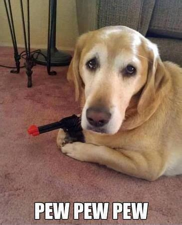 Pew Pew Meme - doggy pew pew meme slapcaption com funnies pinterest