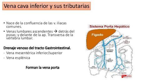 cadenas iliacas comunes anatom 237 a del retro peritoneo