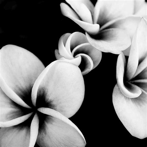 and white black and white vintage photography flowers bierwerx