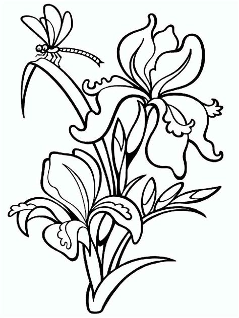 coloring pictures of iris flowers iris flower coloring pages download and print iris flower